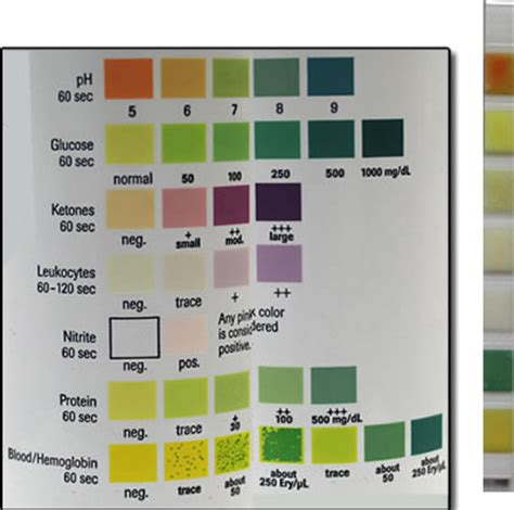 Glucose urine test strips for dogs jpg 400x397