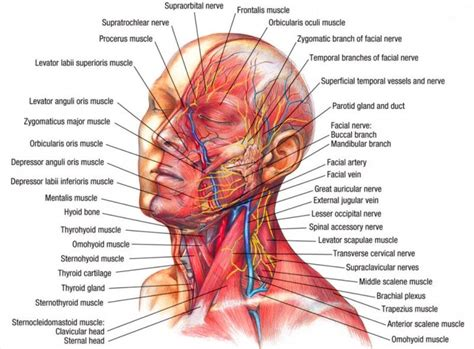 persistant head and facial pain jpg 800x590